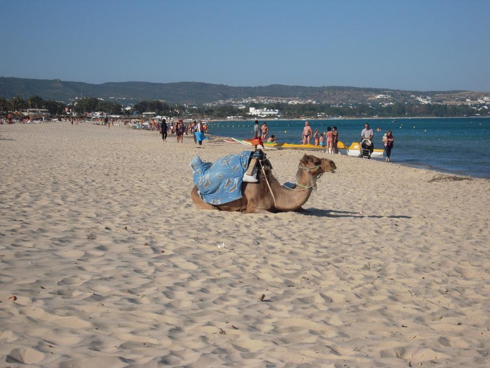 Tunisko2011 (91) b